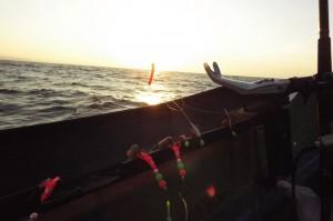 太陽が昇ってきた。エサは紅イカやサンマ