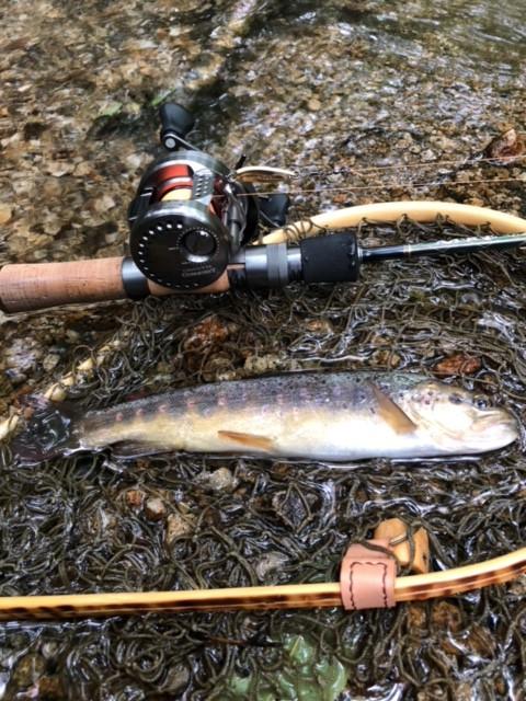 夏の渓流釣行。